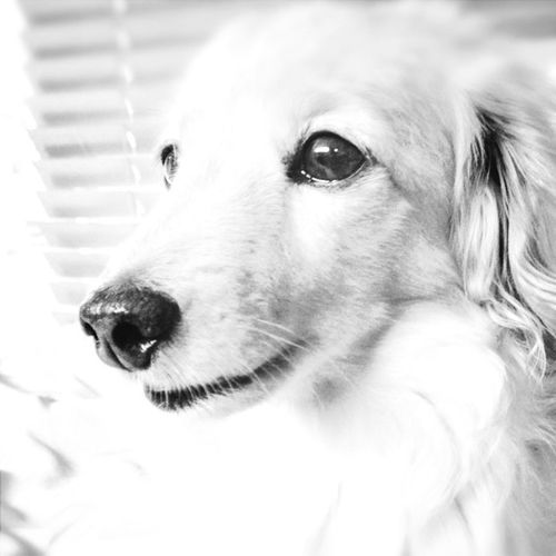 IPhoneography Dog Justgoshot How Are You!?