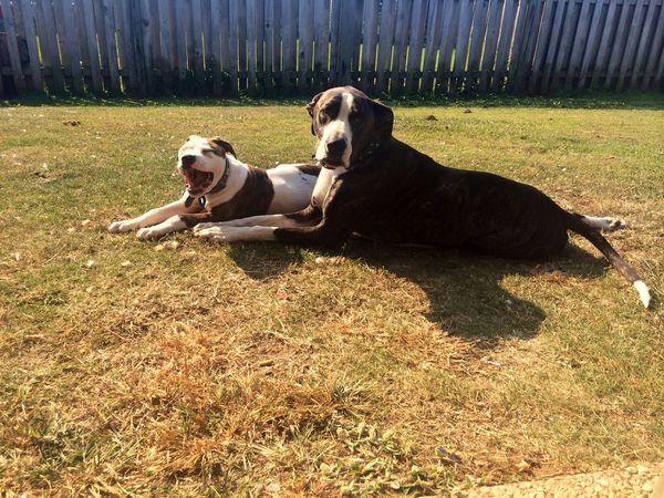 Puppydoooogssss Woof ! Fun With Animals Enjoying Life Yawn