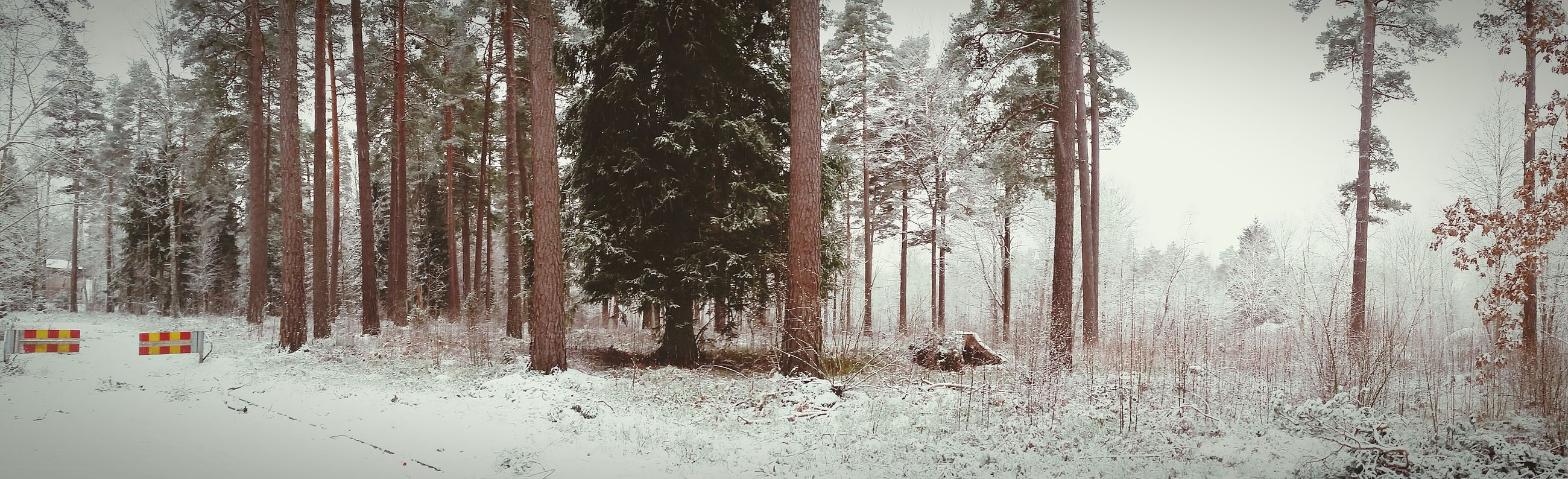 tree, tree trunk, tranquility, winter, nature, snow, forest, cold temperature, tranquil scene, woodland, growth, day, branch, covering, landscape, scenics, season, outdoors, beauty in nature, weather
