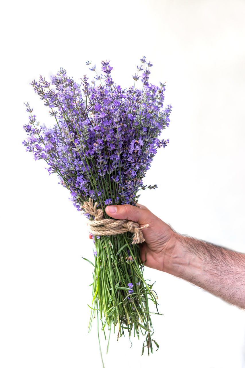 hand, plant, flower, purple, human hand, holding, flowering plant, one person, white background, human body part, studio shot, freshness, nature, lavender, close-up, indoors, vulnerability, food and drink, real people, finger, bunch of flowers, bouquet, herb, flower arrangement