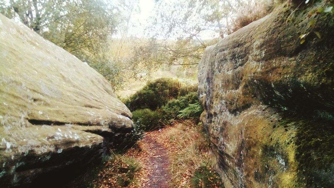 Brimham Rocks Yorkshire Brimham Rocks High Angle View Nidderdale Brimhamrocks Brimham Moor The Week On EyeEm Outstanding Natural Beauty North Yorkshire National Trust 🇬🇧 Day Nature Growth No People Plant Agriculture Outdoors Tree Beauty In Nature Sky Close-up