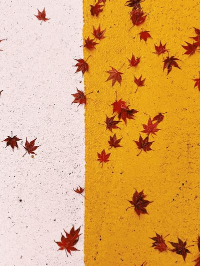 High angle view of maple leaves during autumn