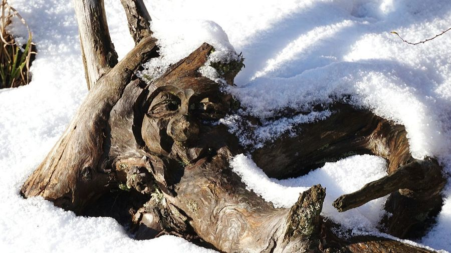 Baumgesicht 😃Hello World Good Morning Outdoors Tree Face Tree Face Nature Snow Close-up Getting Inspired Taking Photos Wintertime Decoration Garden Photography Tadaa Community Light And Shadow January