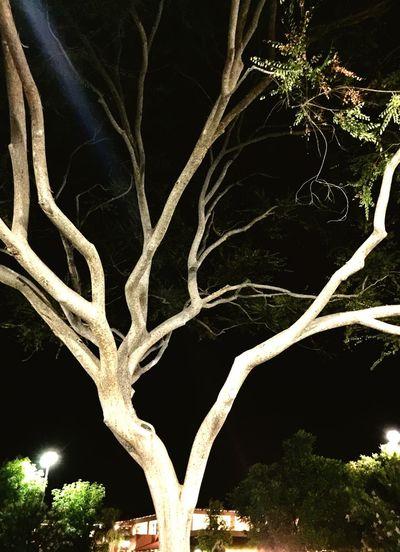 'Bare Tree at