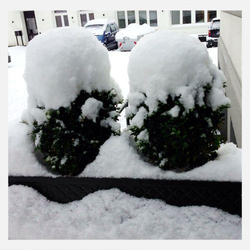 Snow Strange Plants
