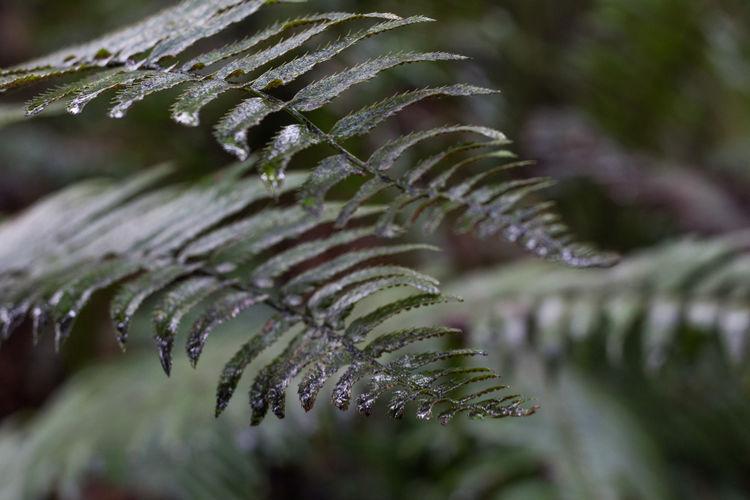 Ferns Plant