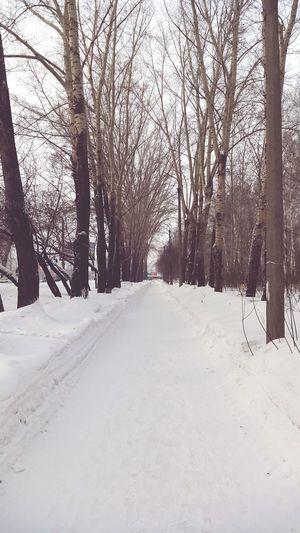 Tree Snow Cold