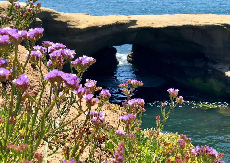 Sunset Cliffs Natural Park Water Beauty In Nature Sea Nature Plant Flowering Plant Flower No People Rock Land High Angle View Solid Outdoors Beach Tranquility Growth Day Rock - Object Tranquil Scene Sunlight