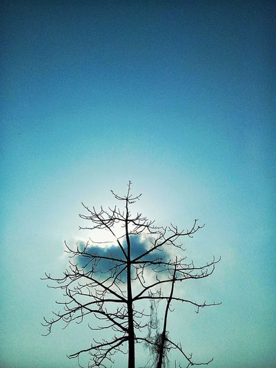 Nature Sky Blue Outdoors Tree Day No People Beauty In Nature EyeEmNewHere Backgrounds Freshness