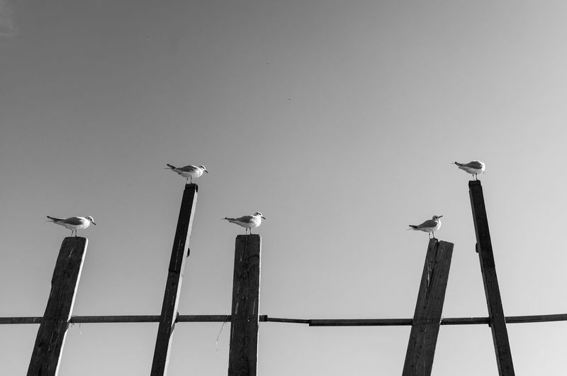 Low angle view of seagulls perching on metal against sky