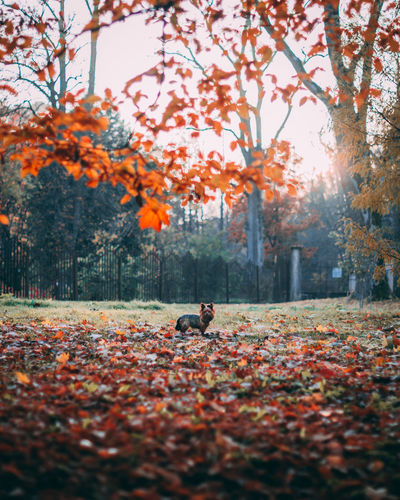 View of autumn leaves on ground