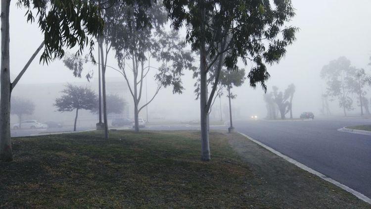 Fog Foggy Foggy Morning Foggy Day Fog In The Trees