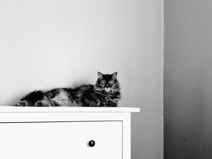 Pets Feline