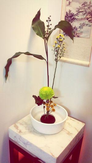 很多時候對別人的好,會由不同形式或不同媒介回饋給你,所交流的藝術與情感,不是只有外在價值,感謝讓我擁有小月桃與小菊們,又能從插花中獲得老師指點與學習,很喜歡! Floriculture Enjoying Life Thankful