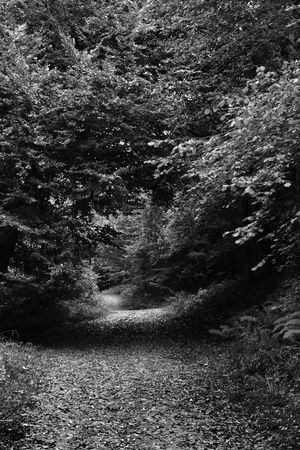 Black & White Forest Path Beauty In Nature Day Forest Forest Of Dean & Wye Valley Growth Landscape Monochrome Nature No People Outdoors The Way Forward Tranquil Scene Tranquility Tree