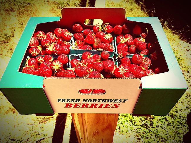 Sommergefühle Strawberries Organic Pacific Northwest