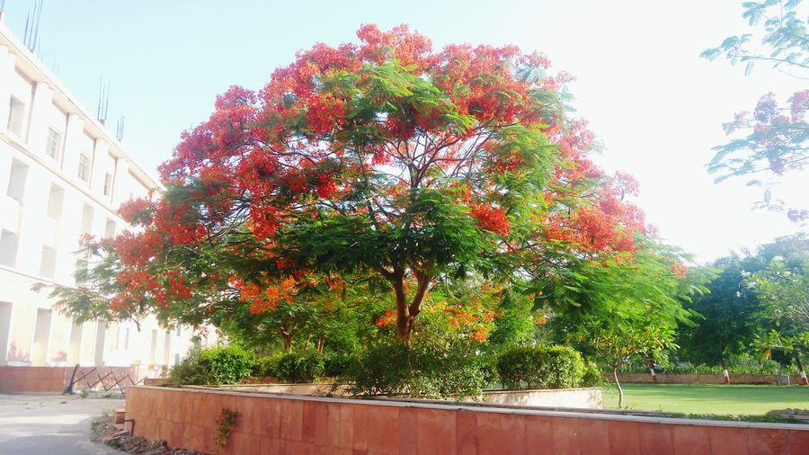College College Campus Elegant Red Color Tree City Flower Sky Architecture Building Exterior Built Structure Plant Life Blooming Growing Young Plant Stalk Stamen In Bloom Pollen Petal Stem Bud