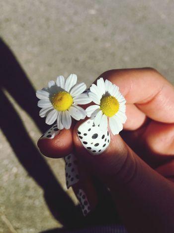 EyeEm Best Shots Fragility Flower Freshness Holding Flower Head Daisy Beauty In Nature Close-up Pollen Nature Botany