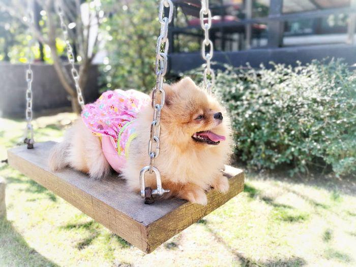 wait EyeEm Ready   Dog Pets One Animal Domestic Animals Animal Themes Mammal Day Outdoors