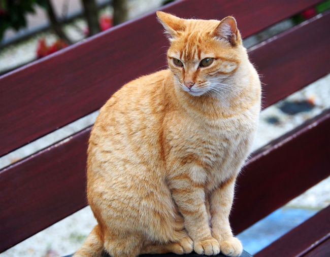 Portrait of tabby cat sitting outdoors