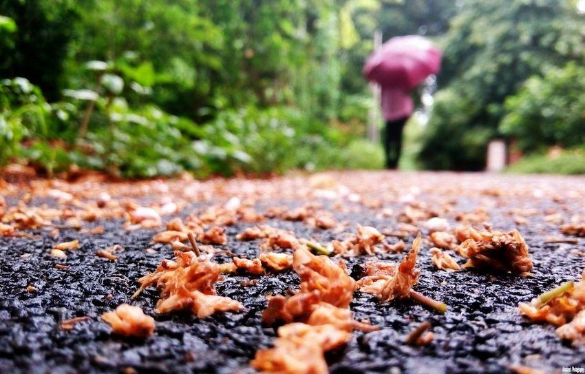 Smartphone Photography Featuredphotographs Monsoonseason
