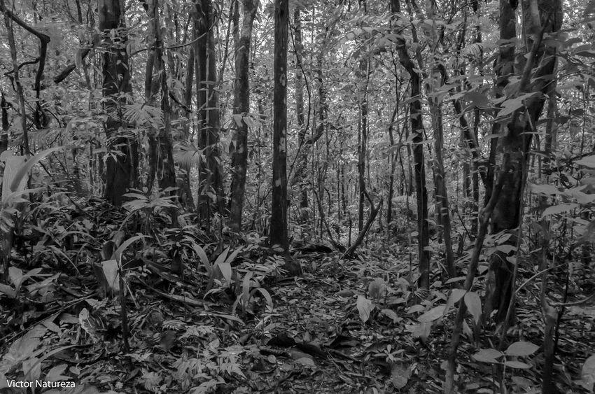 Forest Nature Documentary Fotodocumental Documentaryphotography Vitaonatureza Victornatureza Artefotografia Fotografiaautoral Brasil Travel Destinations Paraty Brazil Beauty In Nature