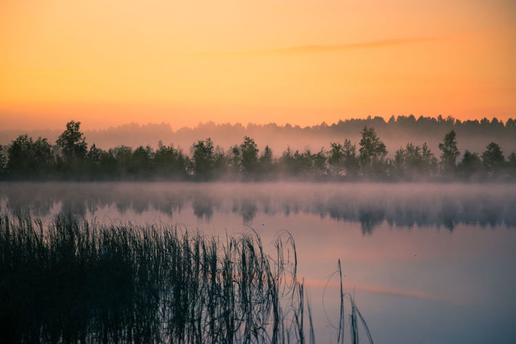 A beautiful, colorful landscape of a misty swamp during the sunrise. Atmospheric, tranquil wetland scenery with sun in Latvia, Northern Europe. Swamp Beauty In Nature No People Plant Scenics - Nature Sky Sunrise Tranquil Scene Tranquility