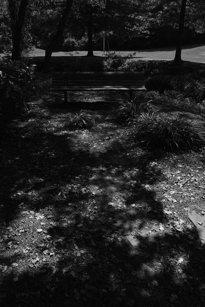 Bench Dark Lines Abstract Beauty In Nature Blackandwhite Dappled Sunlight Day Grass Growth Landscape Monochrome Nature No People Outdoors Scenics Tranquil Scene Tranquility Tree