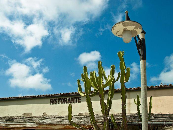 Blue Cactus Cloud Cloud - Sky Non-urban Scene Outdoors Shore Sicily Sky Spring