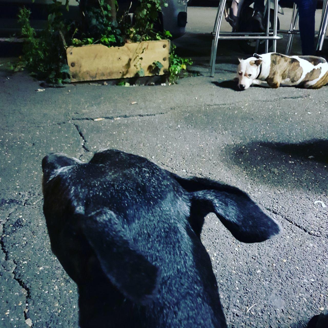DOG SLEEPING IN THE ROAD