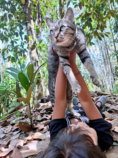 Low section of person with cat on tree against plants
