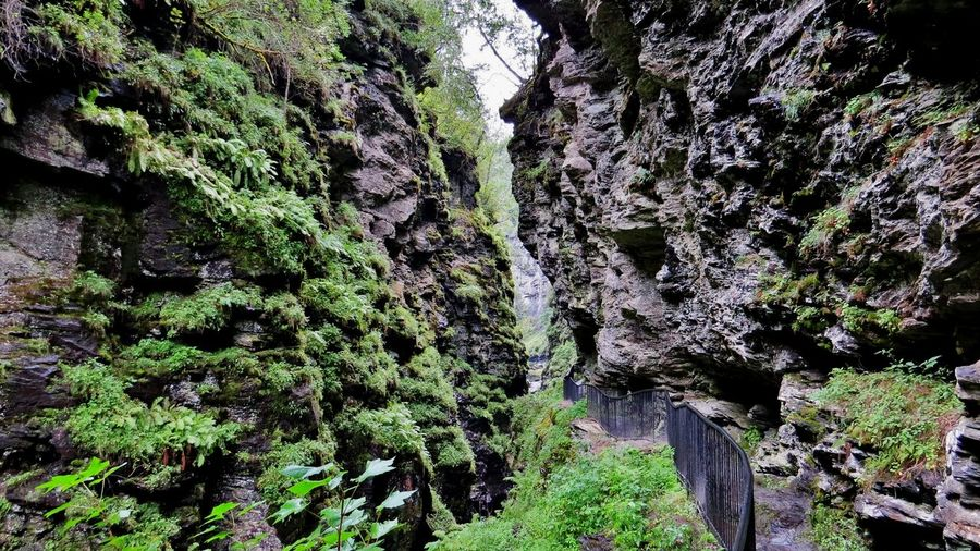 Beauty In Nature Bordalsgjelet Day Exploring Nature Forest Gorge Green Color Growth Hikingadventures Low Angle View Mountain Nature No People Norway Outdoors Ravines & Gorges Scenics Sky Tranquility Travel Destinations Travel Photography Tree VOSS Waterfall Western Norway