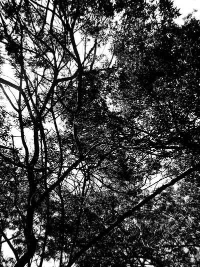 Tree Forest Trees TreePorn Tree_collection  Blackandwhite Black & White Blackandwhite Photography Black&white Black And White Collection  Black And White Eyeem Nature EyeEm Eye Em Eye Em! EyeEm Gallery EyeEm Nature Lover First Eyeem Photo Trees Leaves Leaves Fineart Fine Art Black And White Black Forest
