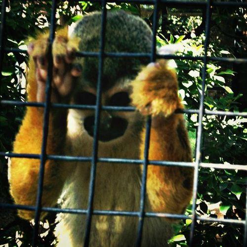 mono Monkey monkeysgotoheaven (null)