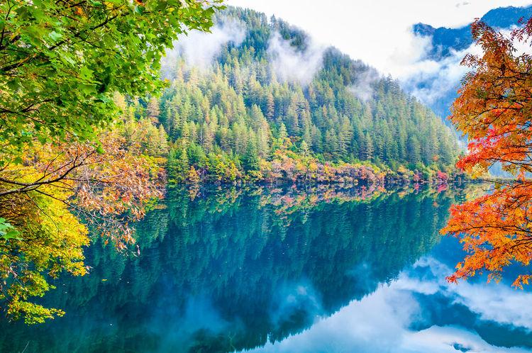 Stunning scene in Jiuzhaigou, Sichuan, China, perfect reflections of trees Autumn Colors Beautiful Lake And Mountain Beauty In Nature Jiuzhaigou Mirror Lake Nature Reflection Scenics Tranquil Scene