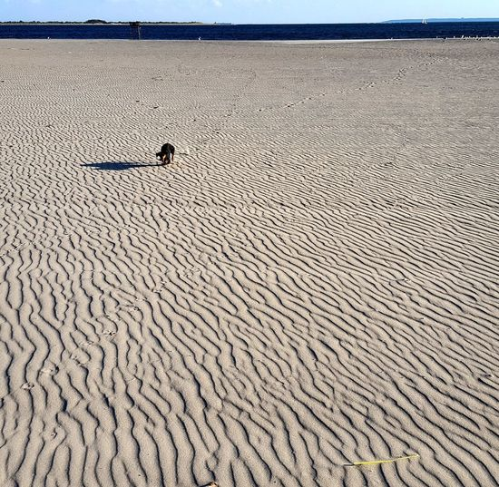 Nature No People EyeEm Selects Beach City Outdoors Dachshund Parksofny Love_NY Landscape Pets Dog Waterfront