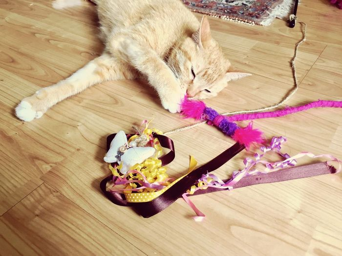 TAP Loves The Cat Toys From Me 🐾 Multi Colored Cat Lovers 🐱💞 Cat Collection Cat Playground EmNewHere Cat Model 3XPSUnity Lying Down Cat Posing The Cat Condition Katzenfoto! Cats 🐱 Cat Posing For Me Cat Toys Playing Cat Cat Eyes (>^ω^<) Pink Color