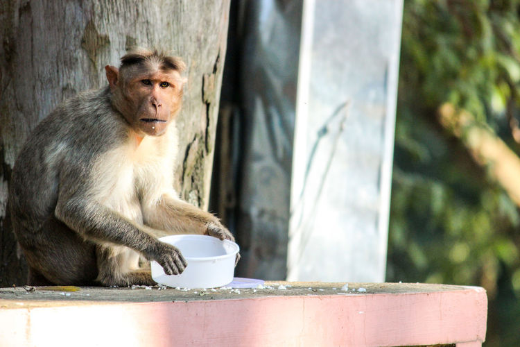 Close-up of monkey sitting outdoors