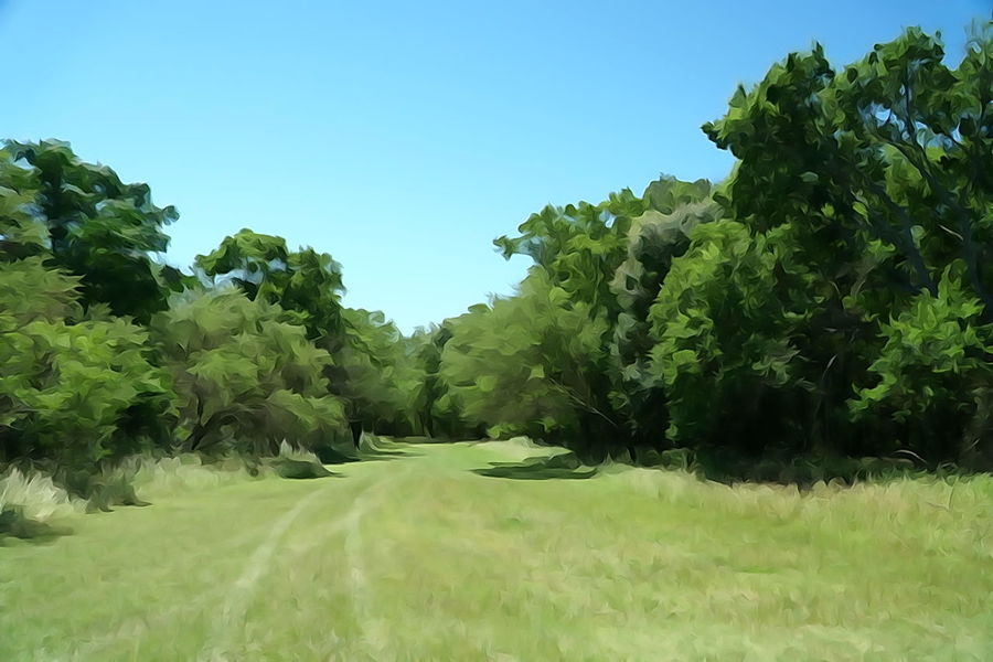 Tree Nature Field Green Color No People Outdoors Tranquility Tranquil Scene Grass Landscape Scenics Rural Scene Day Beauty In Nature Growth Agriculture Clear Sky Sky Golf Course Irrigation Equipment Watercolor Effect Special Effects Backgrounds Green Color Field