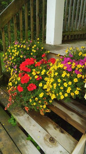 Flower Beauty In Nature Fragility Freshness No People Yellow Plant Rainy Days Carp, Ontario, Canada.