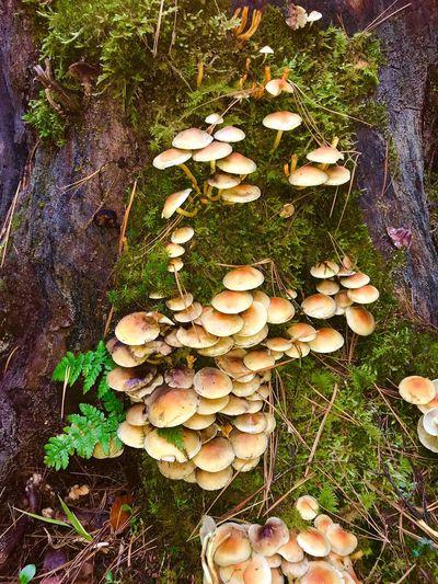 Fungus Mushroom Plant Growth Nature Vegetable No People