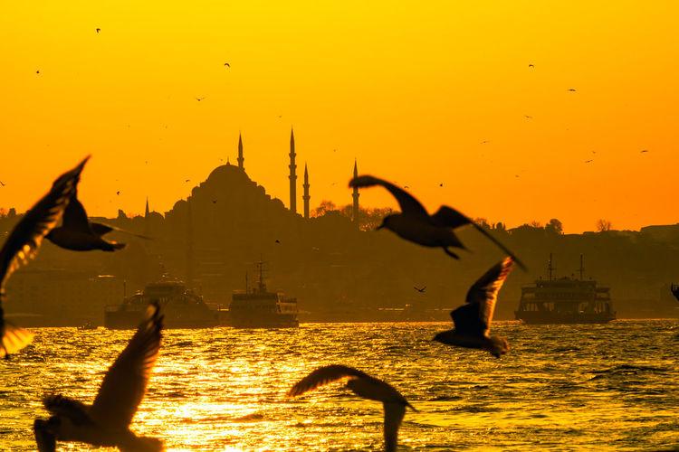 Silhouette of birds flying against sky during sunset
