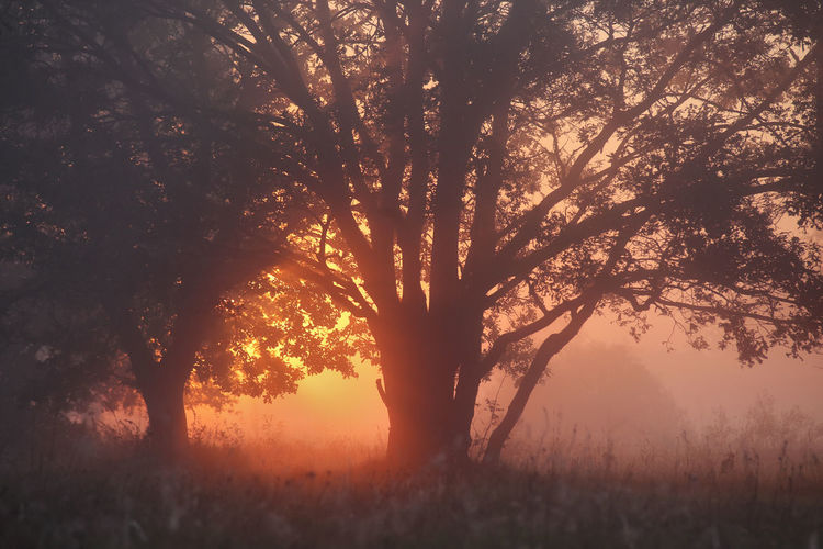 Close-up of tree at sunset