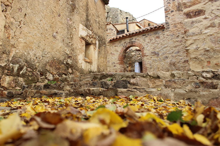 Surface level of dry leaves on wall of old building