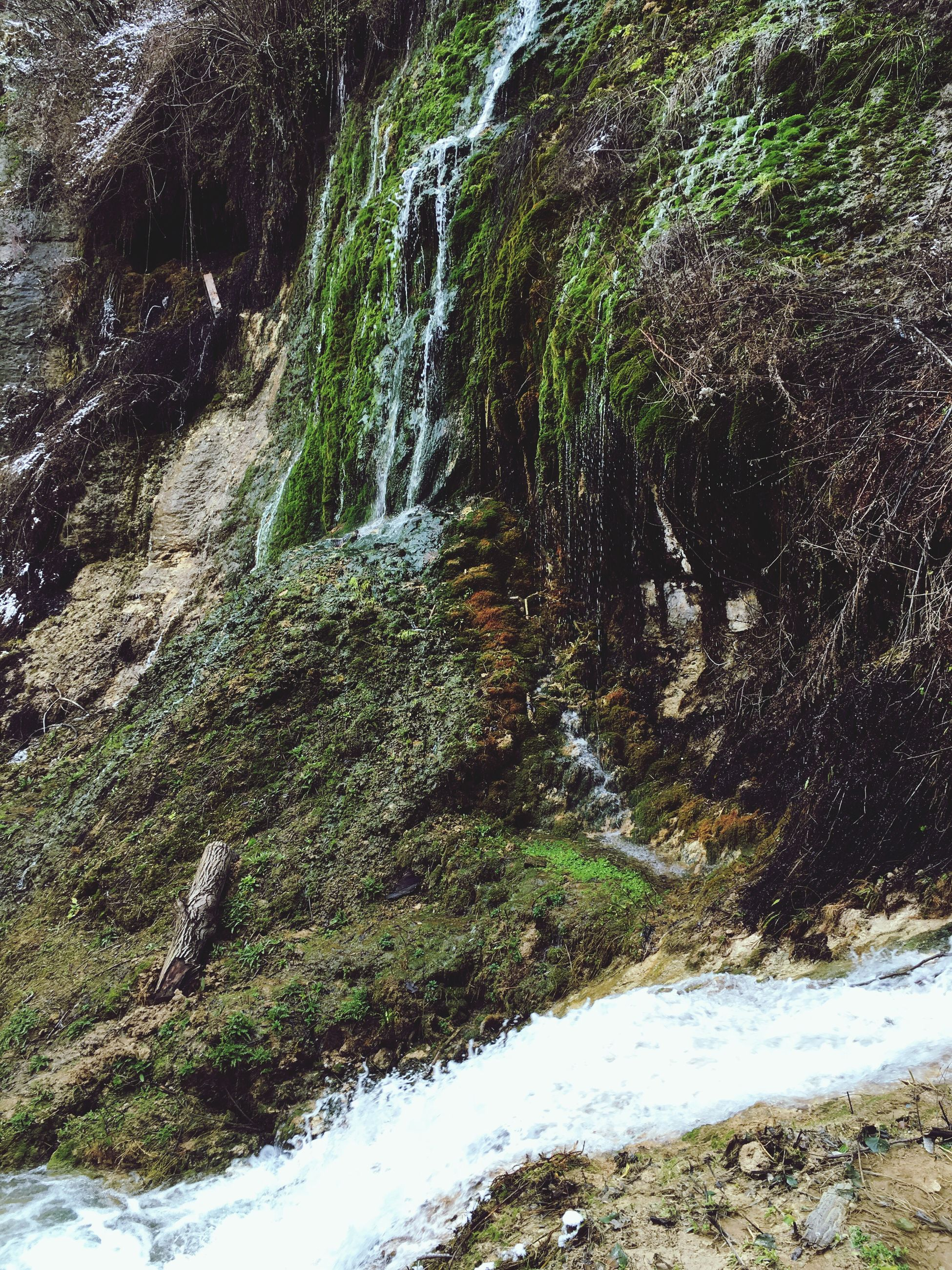 flowing water, water, waterfall, nature, tree, motion, growth, beauty in nature, plant, flowing, rock - object, forest, scenics, stream, green color, moss, tranquility, day, outdoors, no people