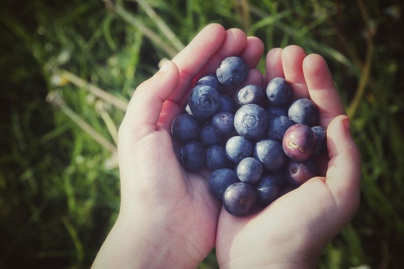 Cropped Hands Holding Blueberries