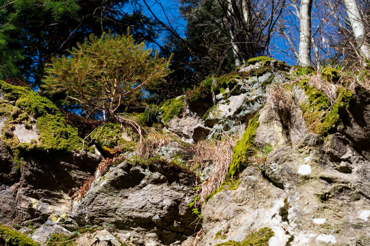 tree, plant, rock, beauty in nature, rock - object, nature, scenics - nature, solid, land, forest, no people, tranquility, day, water, growth, non-urban scene, tranquil scene, outdoors, moss, flowing water, woodland, stream - flowing water, flowing