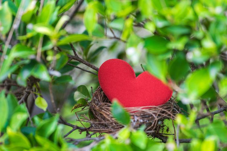 Heart shape amidst leaves in nest
