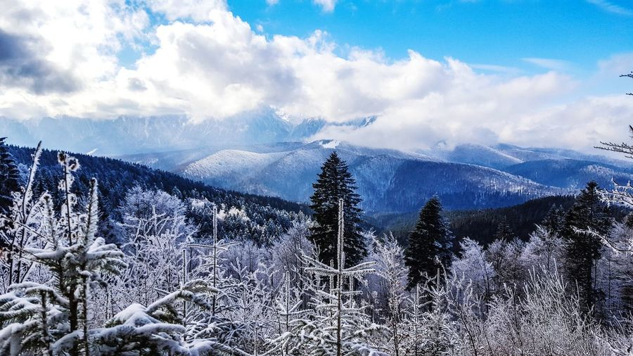 Tree Mountain Snow Winter Cold Temperature Forest Pine Tree Pinaceae Sky Cloud - Sky Spruce Tree Snowcapped Mountain Majestic Mountain Peak Mountain Range