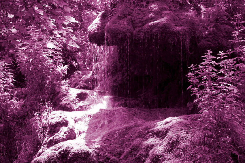 Purple forest Purple View Cascade Coloured Forest Forest Photography Nature No People Roquefort Tree Waterfall
